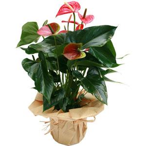 plante tropicale fleur rouge